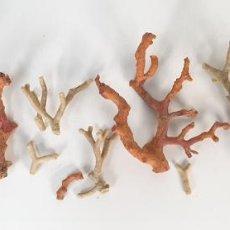 Coleccionismo de moluscos: COLECCIÓN DE FRAGMENTOS DE CORAL. BLANCO Y ROJO. SIGLO XX. . Lote 198103936