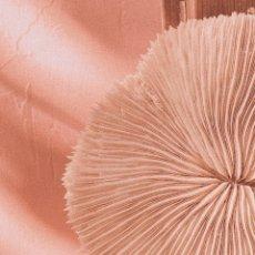 Coleccionismo de moluscos: GRAN CORAL FOSILIZADO BLANCO. Lote 148672510