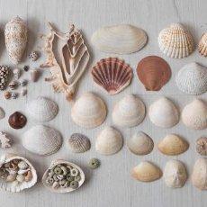 Coleccionismo de moluscos: LOTE DE CONCHAS MARINAS Y ALGUNOS CARACOLES DE TIERRA.. Lote 206278156