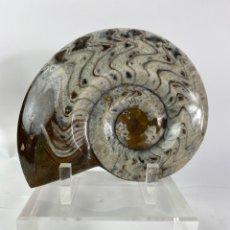 Coleccionismo de moluscos: AMONITE PULIDA CON BASE DE METACRILATO. MEDIDA: 25 X 20 CM.. Lote 209100710
