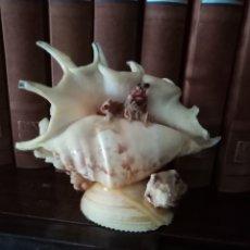 Coleccionismo de moluscos: ORIGINAL ESCULTURA HECHA DE CARACOLAS, CONCHAS, BIVALVOS, FÓSILES DE MAR Y CANGREJO. MUY DECORATIVO. Lote 209857395