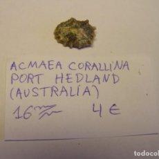 Coleccionismo de moluscos: CARACOL SNAIL SHELL ACMAEA CORALLINA. AUSTRALIA.. Lote 210520826
