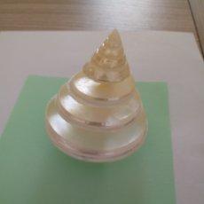 Coleccionismo de moluscos: CARACOL NACAR EXPOSITOR TARJETAS. Lote 214876655