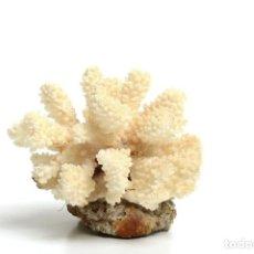 Coleccionismo de moluscos: PIEZA DE CORAL BLANCO ANTIGUA. Lote 218835596