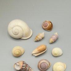 Coleccionismo de moluscos: LOTE DE POLYMITA Y CARACOLES MARINOS DE CUBA DE COLECCIONISTA PARTICULAR. VER FOTOS.. Lote 223214862