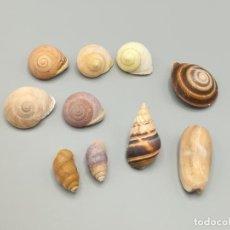 Coleccionismo de moluscos: LOTE DE POLYMITA Y CARACOLES MARINOS DE CUBA DE COLECCIONISTA PARTICULAR. VER FOTOS.. Lote 223215521