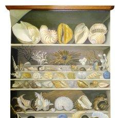 Coleccionismo de moluscos: MALACOLOGIA - CARTEL ESTILO ESCOLAR PINTADO AL ÓLEO INSPIRADO EN LA OBRA DE LEROY DE BARDE. Lote 223577393