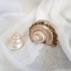 Collezionismo di molluschi: PRECIOSA PAREJA DE CONCHAS CARACOLAS NACARADAS NACAR. Lote 225277065