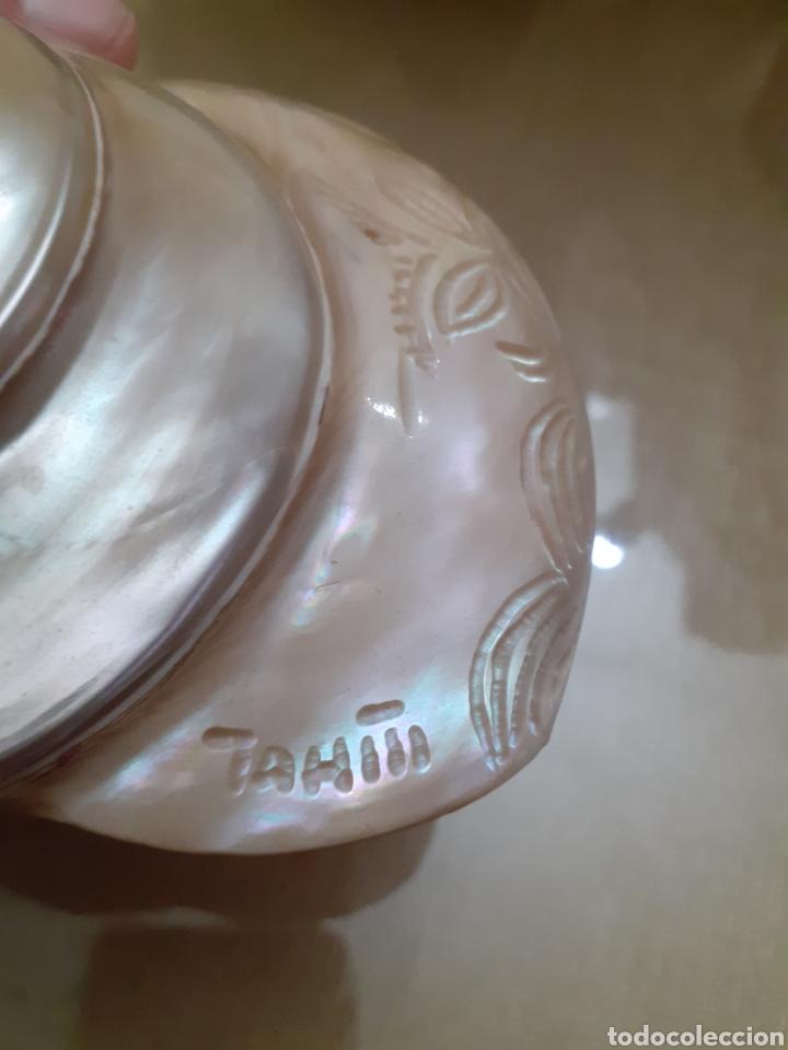 Coleccionismo de moluscos: Espectacular concha caracola NACAR NATURAL TALLADA tahiti - Foto 4 - 225547881