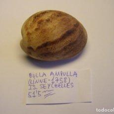 Colecionismo de moluscos: CARACOL SNAIL SHELL BULLA AMPULLA. ISLAS SEYCHELLES.. Lote 227201970