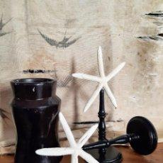 Coleccionismo de moluscos: ESTRELLAS DE MAR CON PEANAS. TAXIDERMIA, MALACOLOGIA, CORAL.. Lote 231976075