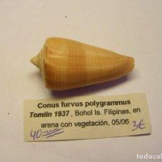Colecionismo de moluscos: CARACOL SNAIL SHELL CONUS FURVUS POLYGRAMUS. FILIPINAS.. Lote 232511990