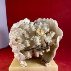 Collezionismo di molluschi: COMPOSICIÓN CONCHA CORAL CABALLITO MAR. Lote 234288830