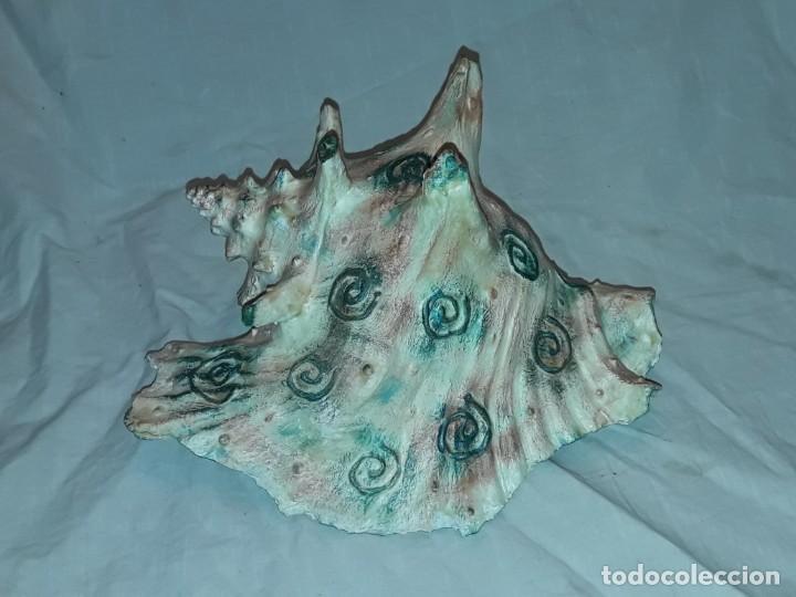 Coleccionismo de moluscos: Muy bella gran caracola natural Reina Lobatus Gigas con hermosa decoración firmada 22cm - Foto 3 - 236040990