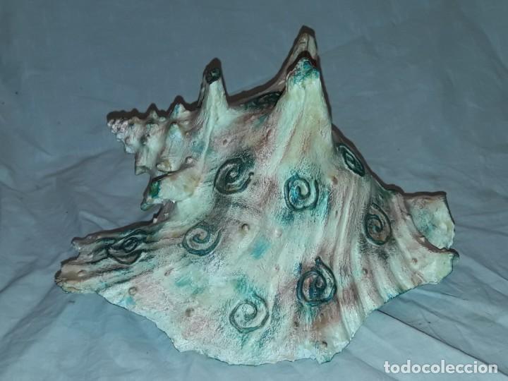 Coleccionismo de moluscos: Muy bella gran caracola natural Reina Lobatus Gigas con hermosa decoración firmada 22cm - Foto 5 - 236040990