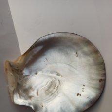 Coleccionismo de moluscos: CONCHA DE NACAR. Lote 237745675
