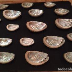 Collezionismo di molluschi: LOTE DE 20 OREJAS DE MAR - HALIOTIS NATURAL - SU ESTADO ES EXCELENTE Y EL NACAR MUY DEFINIDO. Lote 238543105
