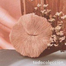 Coleccionismo de moluscos: GRAN CORAL FOSILIZADO BLANCO ANTIQUE UNIQUE. Lote 243959130