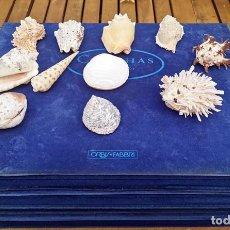 Coleccionismo de moluscos: COLECCIÓN DE CONCHAS DEL MUNDO, ORBIS-FABBRI 1995. Lote 244835865
