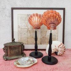 Coleccionismo de moluscos: PAREJA DE CONCHAS CON PEANA. MALACOLOGIA. Lote 245499930
