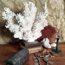 Coleccionismo de moluscos: ANTIGUO CORAL CON PEANA.. Lote 245500115
