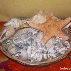Coleccionismo de moluscos: CESTO CON CONCHAS MARINAS. Lote 246016950