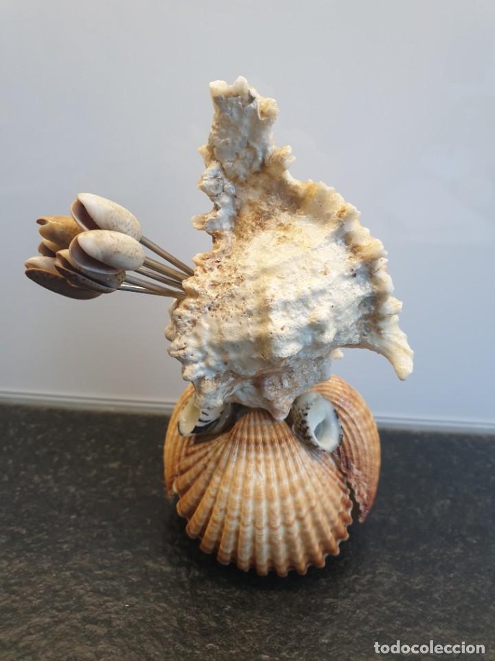 Coleccionismo de moluscos: Pinchos aperitivos hecho con conchas. Recuerdo del Mar Menor (Envío 2,50€) - Foto 3 - 264035230