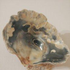 Coleccionismo de moluscos: ANTIGUA CONCHA. Lote 272792128
