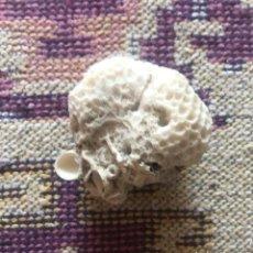 Coleccionismo de moluscos: CORAL BLANCO FOSILIZADO PEQUEÑA BOLA DE CORAL NATURAL MARINO. Lote 276087993