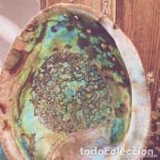 Coleccionismo de moluscos: PRECIOSA GRAN CONCHA DE COLORES INTENSOS ANTIQUE UNIQUE. Lote 288948123