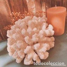 Coleccionismo de moluscos: PRECIOSO CORAL FOSILIZADO BLANCO ANTIQUE UNIQUE. Lote 288971293
