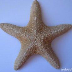 Coleccionismo de moluscos: ESTRELLA DE MAR. Lote 293860598