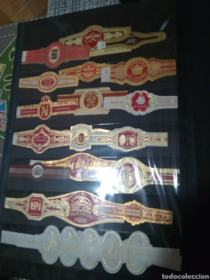 Papel de fumar: Lote de 24 Vitolas de diferentes marcas, - Foto 2 - 195323825