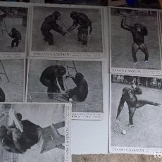 Coleccionismo Papel secante: LOTE DE 9 SECANTES DE JEREZ ENVASES CAMPEÓN CHIMPANCÉS JUGANDO AL TENIS. Lote 128050687