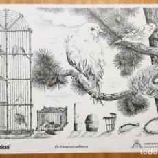 Coleccionismo Papel Varios: CANARIAS-LAMINAS-LA CANARICULTURA. Lote 102733599