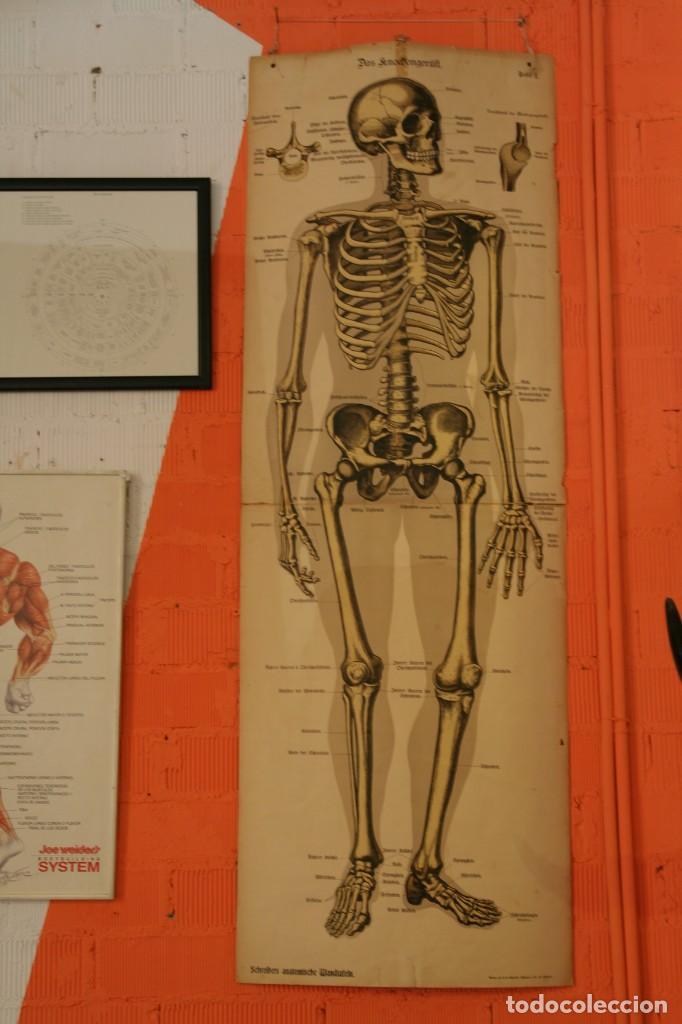 anatomia huesos del cuerpo esqueleto - Comprar en todocoleccion ...