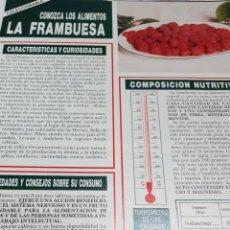 Outros artigos de papel: COLECCIONABLE1 HOJA: CONOZCA LOS ALIMENTOS. EN REVERSO, 4 RECETAS: FRAMBUESA. Lote 145317122