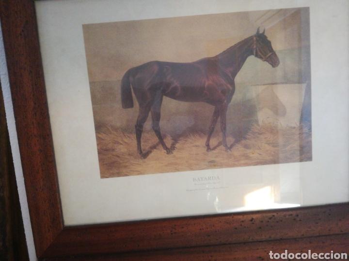 Coleccionismo Papel Varios: Laminas caballos - Foto 2 - 146836240