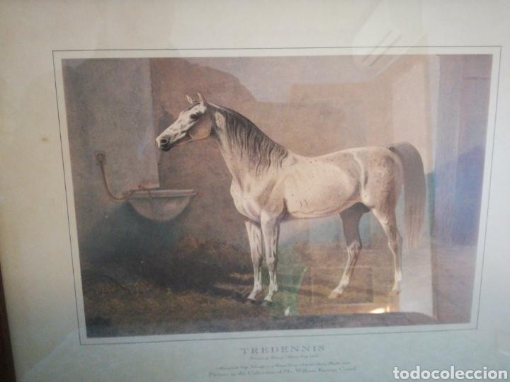 Coleccionismo Papel Varios: Laminas caballos - Foto 3 - 146836240