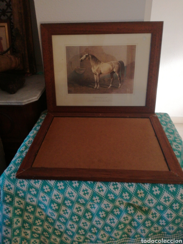 Coleccionismo Papel Varios: Laminas caballos - Foto 4 - 146836240