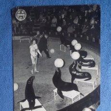 Coleccionismo Papel Varios: CIRCO MEDRANO. 2 FOTOS VINTAGE. FOCAS. PATINADORES. Lote 199482280