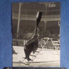 Coleccionismo Papel Varios: CIRCO PRICE. FOCAS. FOTOS VINTAGE. VILLAR. Lote 199482487