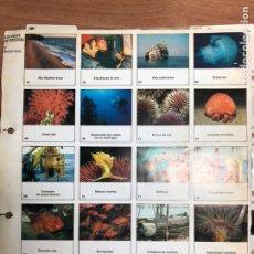 Coleccionismo Papel Varios: DIAPOSITIVAS DE LOS VIAJES DE COUSTEAU. Lote 248286590