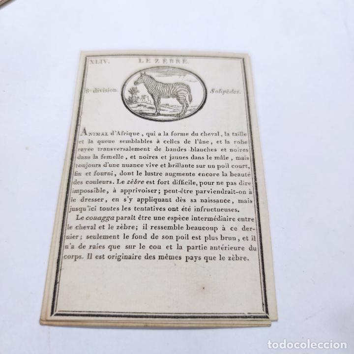Coleccionismo Papel Varios: Colección de 43 cartas en estuche. La historia de los animales. París. Chez ant. Aug. Renouard. - Foto 7 - 268938964