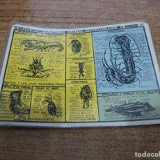 Coleccionismo Papel Varios: FICHA DISTEIN ANATOMIA ANIMAL INVERTEBRADOS II 1971. Lote 295395098