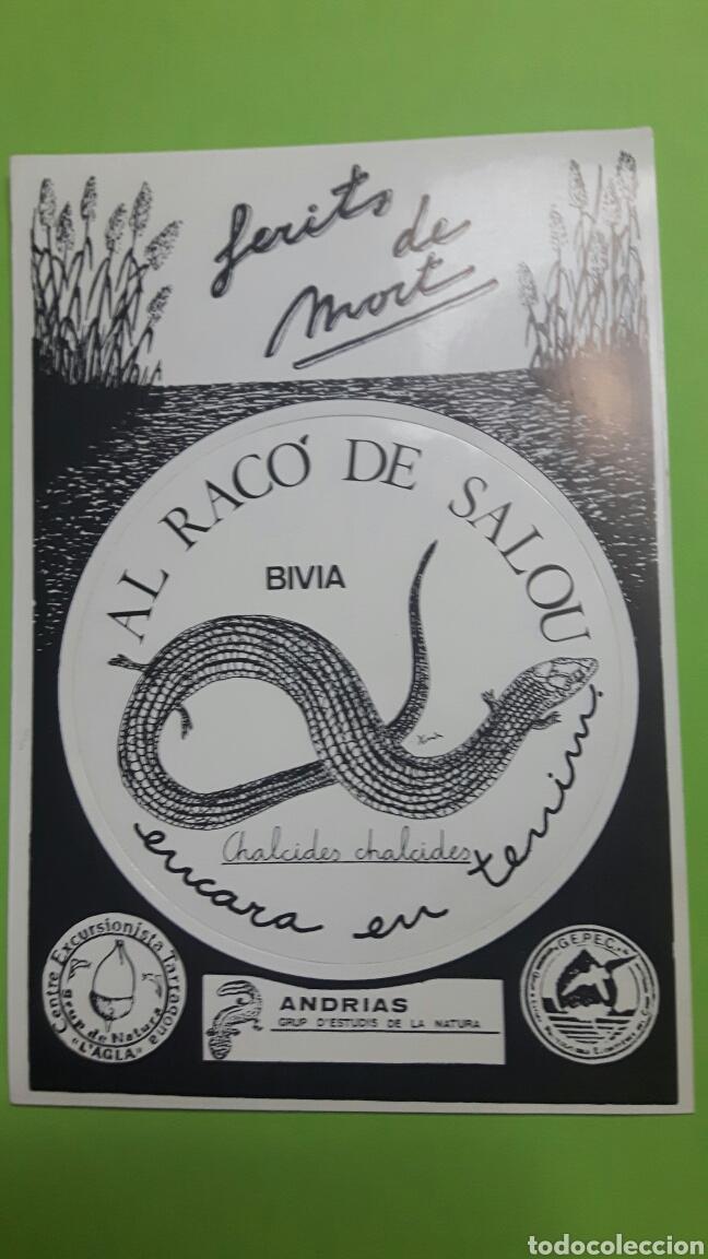 PEGATINA ADHESIVO STICKER ECOLOGIA ECOLOGISMO (Coleccionismos - Pegatinas)