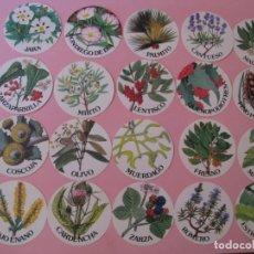 Pegatinas de colección: LOTE DE 20 PEGATINAS DE PLANTAS, QUE SE ENCUENTRAN EN EL COTO DE DOÑANA. 6,2 CM. . Lote 133587010