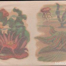 Pegatinas de colección: C17-5-50 CALCOMANIAS ORTEGA SERIE ESTRELLAS DE MAR Y SIMILARES SERIE D - D Nº 50.. Lote 173606967
