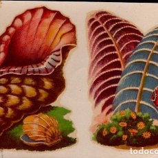 Pegatinas de colección: C17-5-53 CALCOMANIAS ORTEGA SERIE CONCHAS DE MAR Y SIMILARES SERIE D - D Nº 53.. Lote 173607142