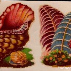 Pegatinas de colección: C17-5-53 CALCOMANIAS ORTEGA SERIE CONCHAS DE MAR Y SIMILARES SERIE D - D Nº 53.. Lote 173607185